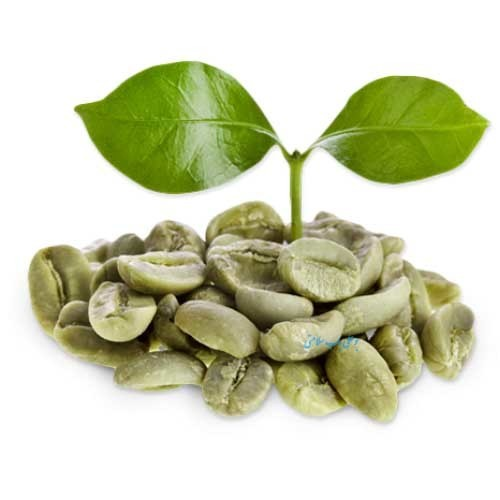 خرید آنلاین قهوه سبز درجه یک از فروشگاه اینترنتی عطاری وجیسنک